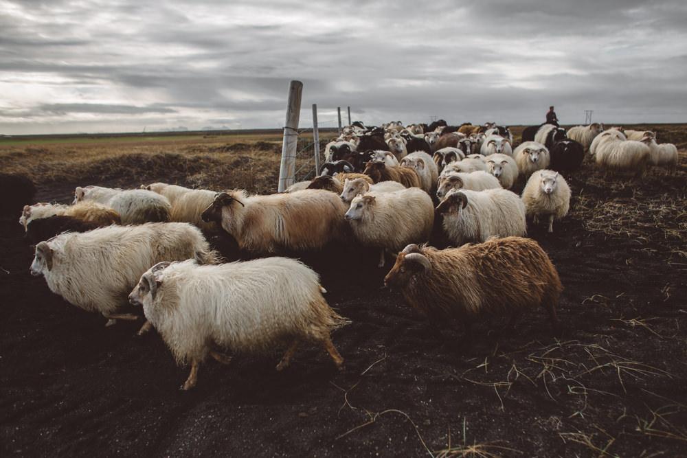 2015_10_16-23_Islandia_A_109