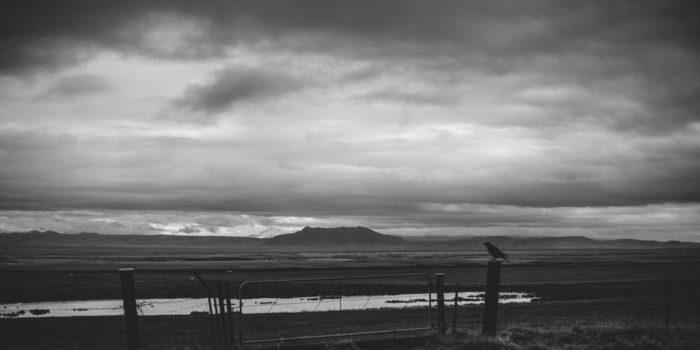 RAVEN. ICELAND