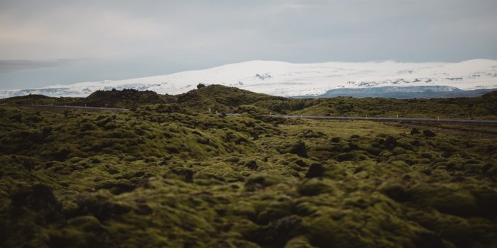 THE MOSS. ICELAND