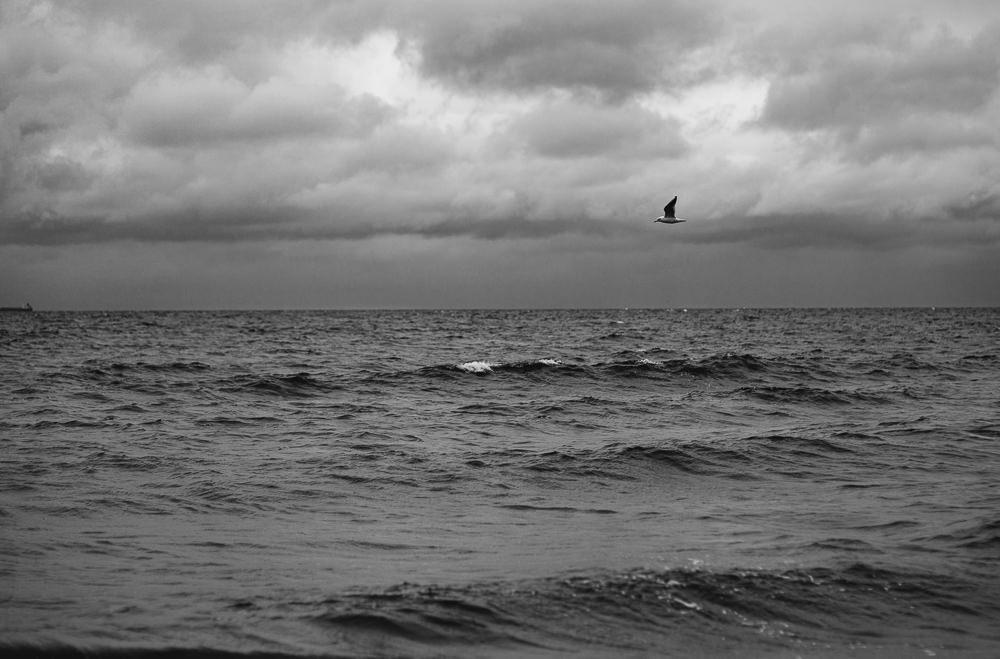 037 037 26 12 Seagull