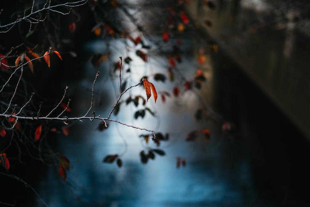 148 148 37 55 Autumn Leaves