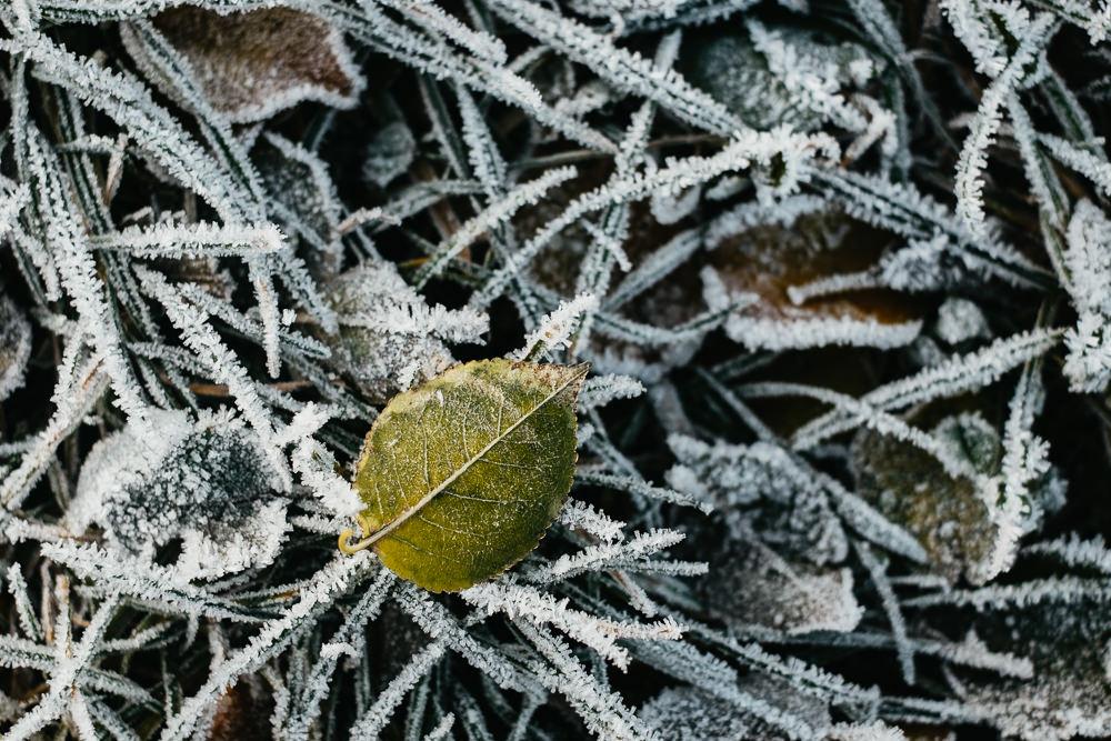 163 163 52 60 Winter Leaf